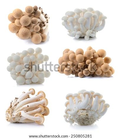 brown beech mushroom and white mushroom isolated on white background - stock photo