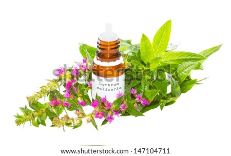 Brown bottle with a dropper top containing essential oil or natural plant extracts from the Lythrum salicaria plant, a healing herb used as a cure for diarrhoea and dysentry, isolated on white - stock photo