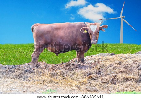 Brown Breeding bull with horns and ear tag on a dunghill in the background the green manner and a wind turbine. - stock photo