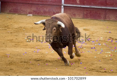 Brown bull attacking Spanish bullfighter - stock photo