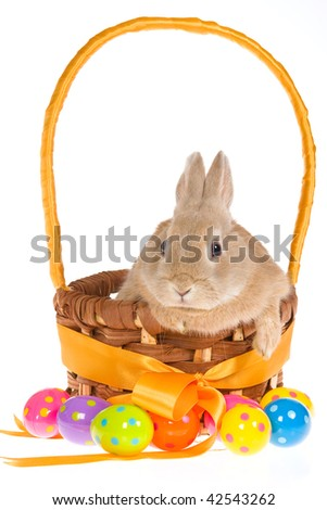 Brown bunny with Easter basket and eggs, on white background - stock photo
