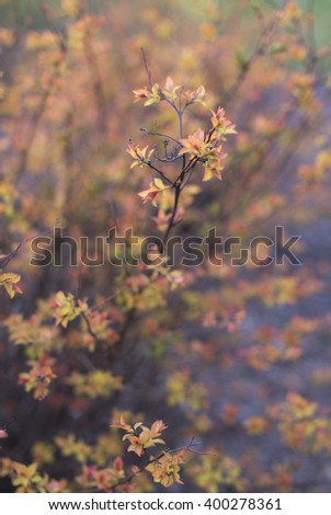 Brown bush over nature background. Spring background. - stock photo
