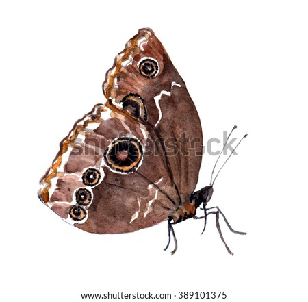 Brown butterfly. Watercolor