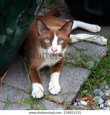 Brown cat - stock photo