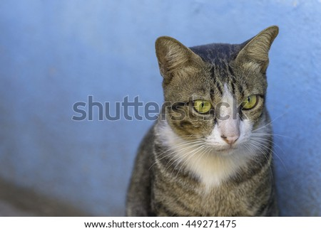 Brown cat looking for its owner. - stock photo