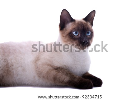brown cat looking right. On a white background