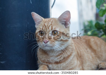 brown cat with acting beautiful and cute animal.