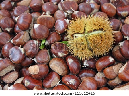 brown chestnut and a pungent Hedgehog with the fruit inside - stock photo