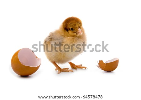Brown chicken isolated on a white background - stock photo
