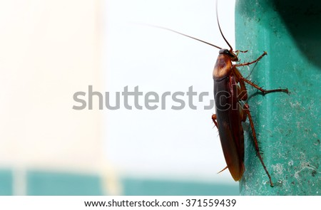 brown cockroach  - stock photo