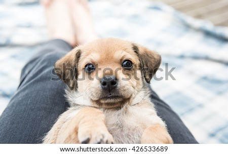 Brown Colored Terrier Mix Puppy Laying on Back - stock photo