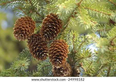 brown cones