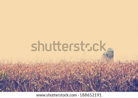 brown corn crop field facing drought dry weather with filter effect - stock photo