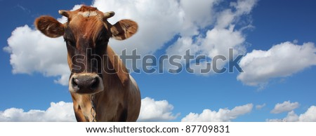 Brown cow looking to a camera on blue cloudy sky background - stock photo