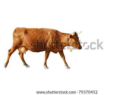 brown cow on a white background - stock photo