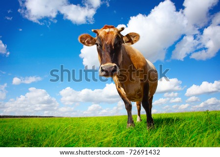 Brown cow standing on green meadow on cloudy sky background and looking to a camera - stock photo