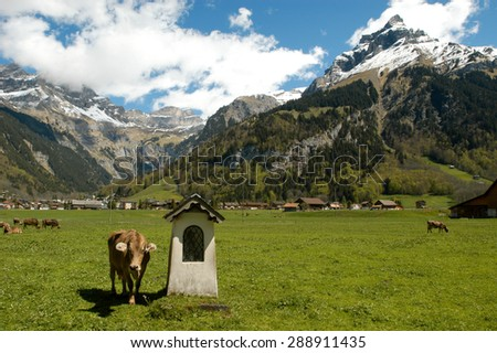 Brown cows in the alpine meadow at Engelberg - stock photo