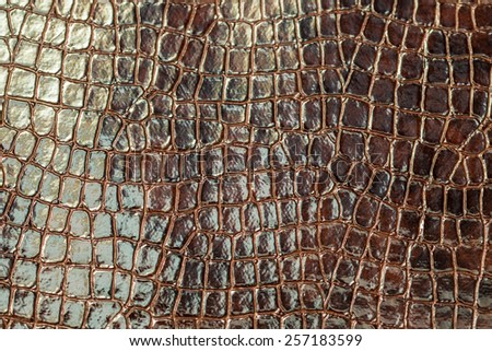 brown crocodile texture   - stock photo