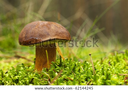 Brown cup mushroom in green moss. - stock photo