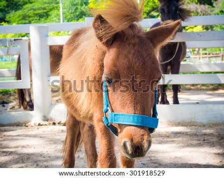 Brown cute Pony in stable, pony horse stall - stock photo