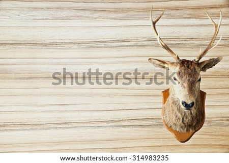 Brown deer head realistic on brown wood wall : Deer head taxidermy : The concept cowboy background : Space on the wooden wall - stock photo