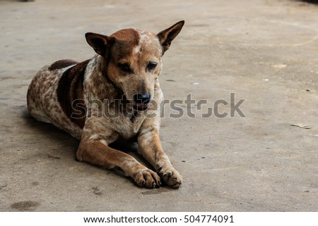 Brown dog in the streets