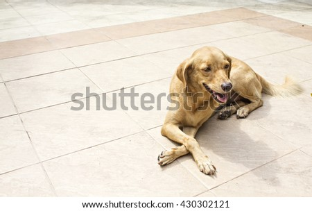 brown dog lay down on floor.