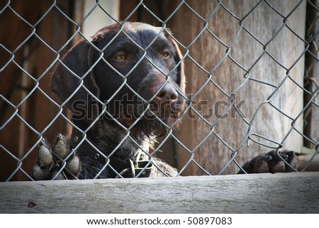 brown dog locked in a cage