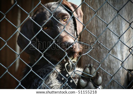 brown dog locked in a cage - stock photo