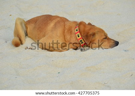 Brown Dog lying on the sand alone - stock photo