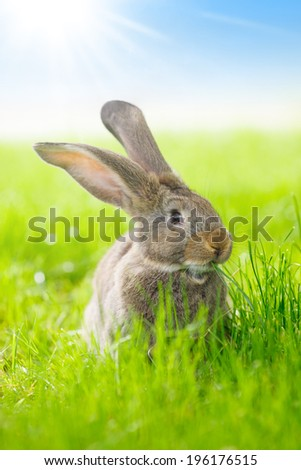 Brown domestic rabbit sitting in green grass - stock photo