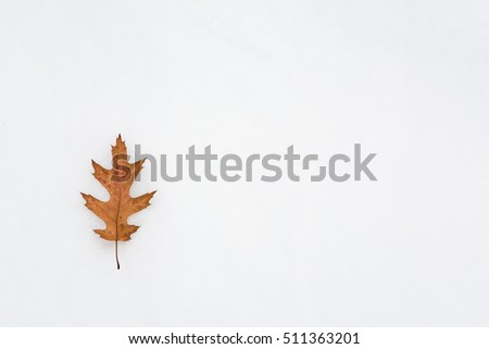 Brown dry leaf lying on snow background with copy space for text.