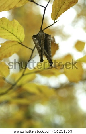 Brown, dry leaves in front of a blurry fall background. - stock photo