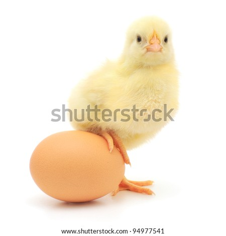 brown egg and chicken isolated on a white background - stock photo