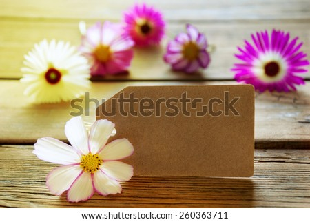Brown Empty Label With Copy Space For Your Text Here Or Free Text With Sunny Yellow Effect With Purple And White Cosmea Blossoms On Wooden Background Vintage Retro Or Rustic Style - stock photo