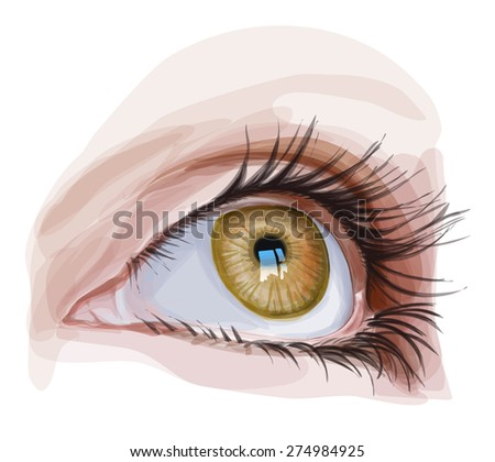 Brown Eye illustration - stock photo