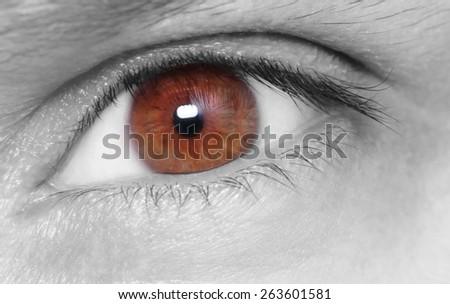 Brown eye. Macro shot. - stock photo