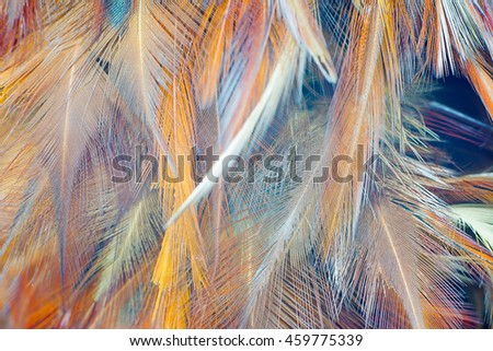 Colorful feathers chicken feathers background texture for Colour trend wallpaper