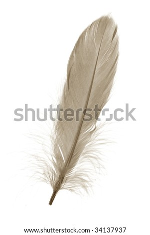 Brown Feather with white background