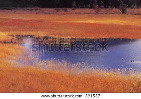 Brown Field - stock photo