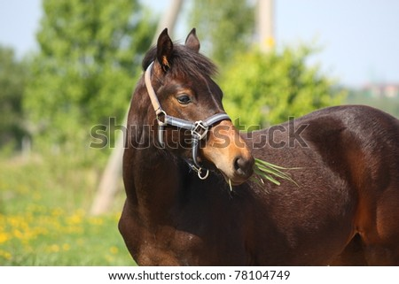 Brown foal eating grass - stock photo