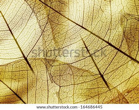 brown foliage texture - stock photo