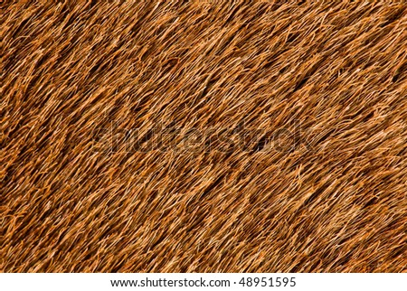 Brown fur - stock photo