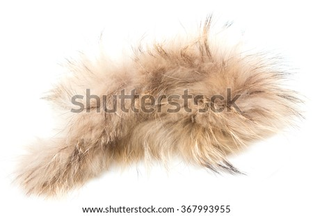 brown fur on a white background