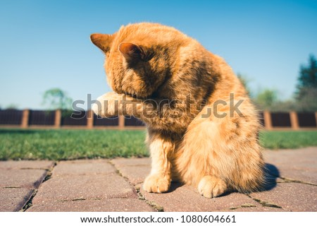 stock-photo-brown-ginger-cat-hiding-it-s