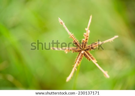 Brown grass flower on green field background - stock photo