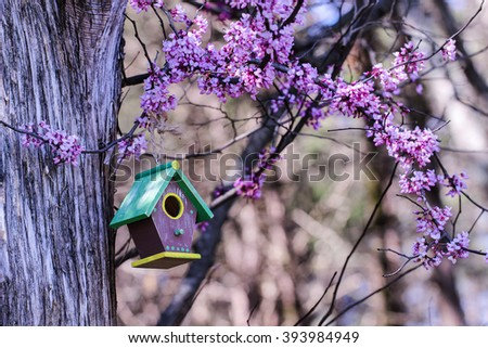 Brown, green and yellow birdhouse hanging from tree with purple spring blossoms - stock photo