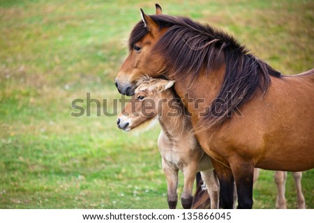 Brown Horse and Her Foal in a Green Field of Grass. Horizontal shot - stock photo