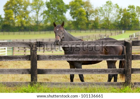Brown horse by the fence - stock photo