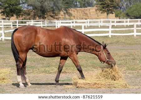 brown horse eat hay - stock photo